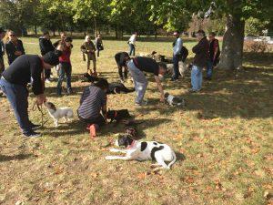 cours de dressage canin sur Vincennes