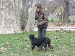 dressage pour chien sur Vincennes (94)