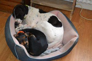 pension pour chien proche de Vincennes