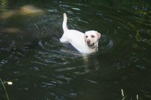 baignade dans le Bois de Vincennes